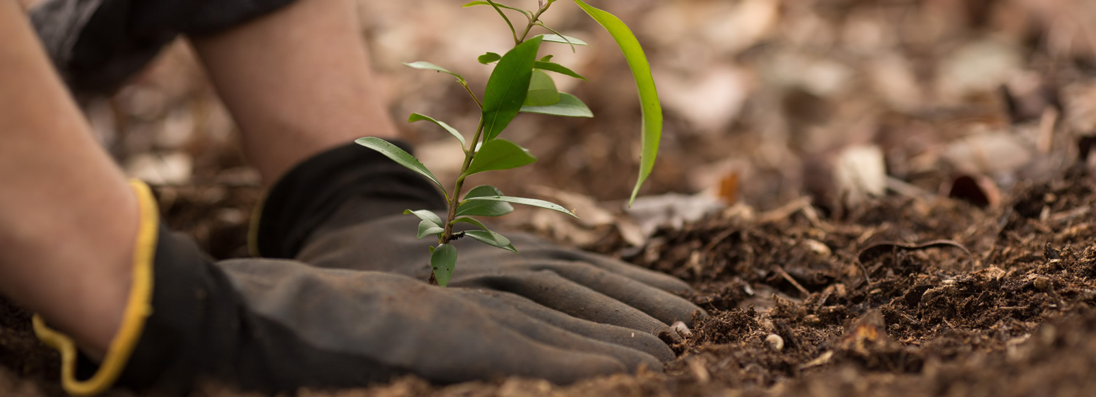 Planting a tree - sustainability and responsibility