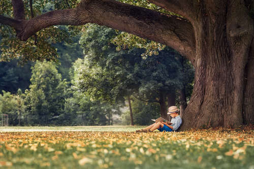 A male child sits alone in a park, underneath a large tree while reading a book.