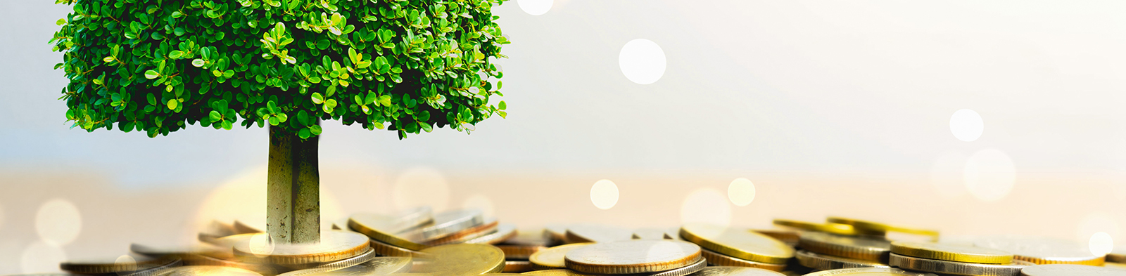 tree growing surrounded by coins