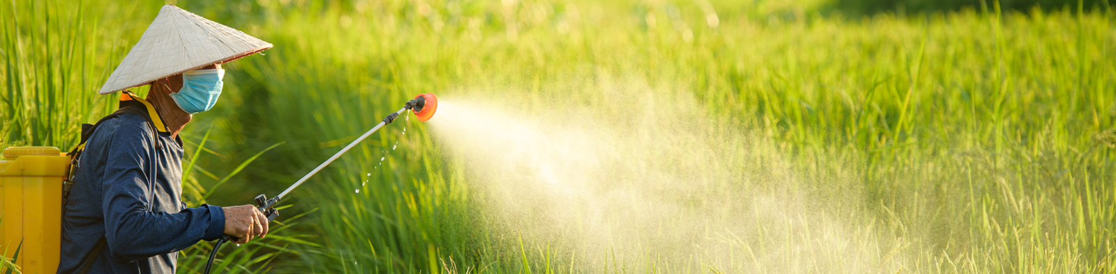 Chinese farmer sprays pesticide on crops